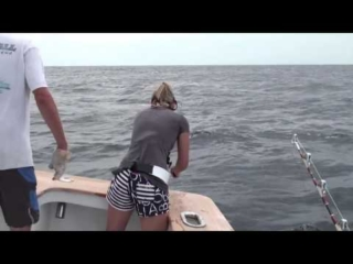 Hog Wild Offshore Fishing for White Marlin, Blue Marlin, Tuna and more